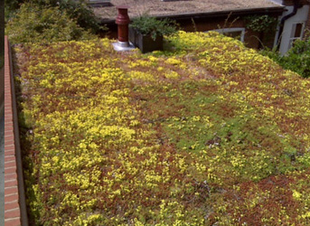 Wallbarn Green Roof Systems Living Walls Amp Landscaping
